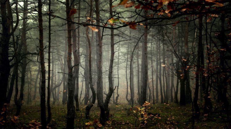Ratujmy Las Milowy – petycja
